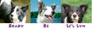 DogSigFiend2.jpg